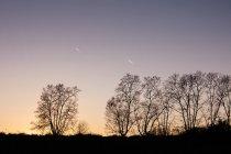 Silueta de árboles en la colina al atardecer - foto de stock