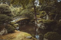 Невеликий дерев'яний міст над річкою в зелений ліс. — стокове фото