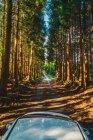 Auto bianca guida su strada rurale attraverso la foresta sempreverde nella giornata di sole . — Foto stock