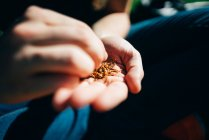 Crop male hands rolling fresh aromatic tobacco in cigarette. — Stock Photo