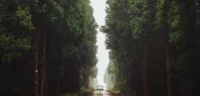 Panorama with lonely car on road among huge green lush trees in misty forest. — Stock Photo