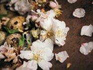 Gros plan vue de œuf de caille en fleurs blanches — Photo de stock