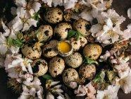 Par dessus des tas de œufs de caille placé dans douces fleurs blanches. — Photo de stock