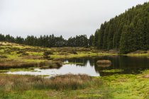 Small pond on green field at forest in cloudy day. — Stock Photo