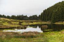 Petit étang sur champ vert en forêt par temps nuageux . — Photo de stock