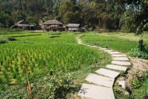Small concrete path to rural buildings on green meadow in Thailand. — Stock Photo