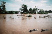 Laos, 4000 isole zona: Villaggi in movimento sulla barca al fiume sporco — Foto stock
