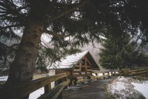 View to cabin among pine trees snowy landscape. — Stock Photo