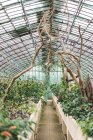 Interior view to greenhouse with various green plants. — Stock Photo