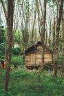 Pequena casa de madeira com telhado de palha na floresta — Fotografia de Stock