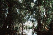 Ver a estanque en verde bosque hermoso de día soleado. - foto de stock