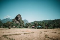 Terrain sec et Forêt Tropique sur les collines en journée ensoleillée — Photo de stock