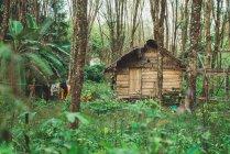 Vue sur la petite maison en bois grungy en vert de la forêt tropical — Photo de stock