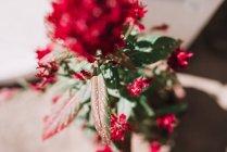 Acima de belas flores vermelhas na haste verde. — Fotografia de Stock