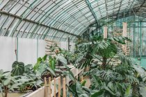 Assortment of green plants growing in greenhouse. — Stock Photo