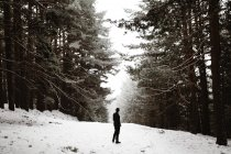 Rear view of tourist standing in snowy forest and admiring foggy sky — Stock Photo