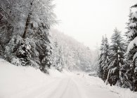 View to road among fir trees covered with snow in winter day. — Stock Photo