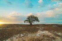 Большой зеленый дерево на берегу моря над живописным небо — стоковое фото