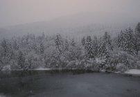 Переглянути зима озера з смерекові дерева лісу на березі. — стокове фото