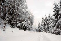 Camino cubierto de nieve entre abetos en día de invierno - foto de stock