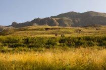 Paisaje escénico con el campo iluminado con montañas de fondo - foto de stock