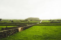 Landschaft mit grünen Wiesen und Stein Zäune in nebligen Tag gemacht — Stockfoto