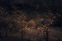 Cabin in forest during at night — Stock Photo