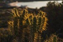 Cactus que crece en la luz del sol - foto de stock