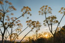 Grass and umbels of wildflowers — Stockfoto