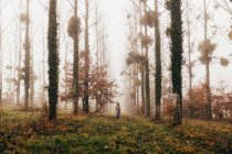 Donna in piedi in foresta nebbiosa — Foto stock