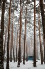 Blue van parked in winter forest — Stock Photo