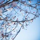 Ramas con flores suaves - foto de stock