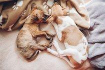 Милые щенки спят вместе — стоковое фото