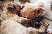 Lindos cachorros durmiendo juntos - foto de stock