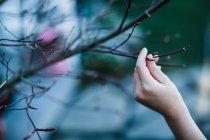 Mão humana tocando galho sem folhas — Fotografia de Stock