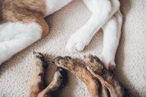 Patas de filhotes adormecidos em cobertor — Fotografia de Stock