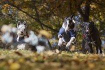Активные собаки в осеннем парке — стоковое фото