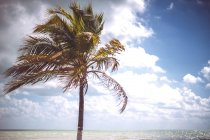 Palm growing on shore on Caribbean sea, Mexico — Stock Photo