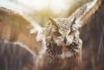 Крупным планом совы, расправляющей крылья в природе — стоковое фото