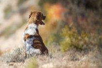 Piccolo cane seduto nel prato autunnale — Foto stock