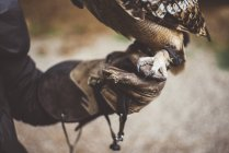 Close-up of Owl standing on hand wearing glove in nature — Stock Photo