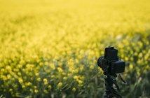 Câmera de foto retrô no campo de flores amarelas — Fotografia de Stock