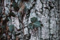 Piccolo ramo, albero — Foto stock