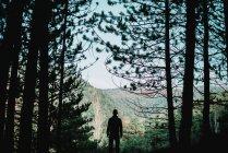 Чоловік, що стоїть в лісі — стокове фото