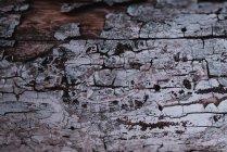 Texture écorce arbre — Photo de stock