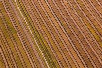 Идиллический чередующиеся поля — стоковое фото