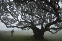 Темні силует поблизу велике дерево — стокове фото