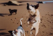 Dogs playing on wet sand — Stock Photo