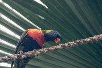 Primer plano del loro brillante en la cuerda bajo la hoja de palma verde - foto de stock