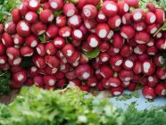 Heap of fresh red radish at farmer market — Stock Photo